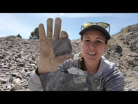 Episode 4 - Get Out and See Your Backyard: U-Dig Fossils