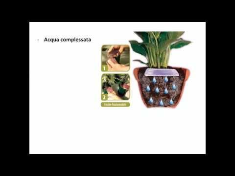 Annaffiare le piante da appartamento in vacanza- Corso di giardinaggio per piante da appartamento