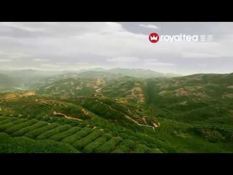 Royaltea Việt Nam - Thoả Vị , Mãn Lòng