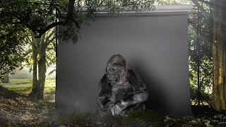 Ta gorylka znała język migowy. To, co przekazała ludziom przed śmiercią, wstrząsnęło całym światem!
