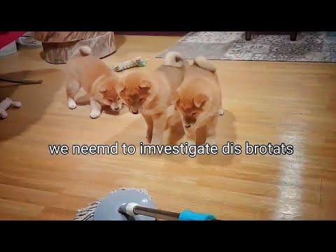 Potats Afraid of Floor Mop 😆😅