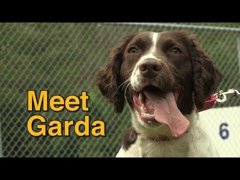 Meet @TorontoPolice Dog Garda