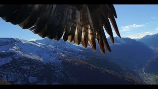"""2 eagles attack Phantom 3 professional"""" I was enjoying flying around with my phantom 3 professional. Suddenly two eagles attack..."""