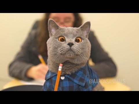 Aaron's Animals NEW VIDEO COMPILATION 2017 || FunnyVines