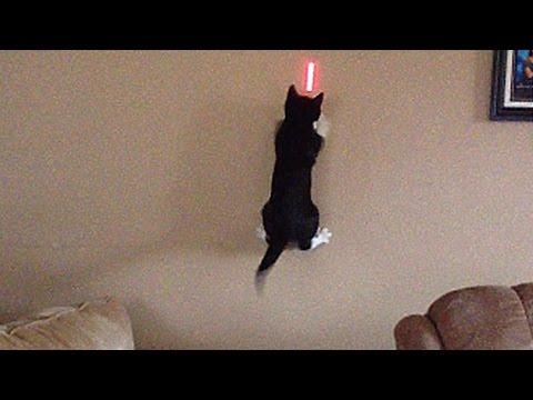 gatti contro laser, chi vincerà?