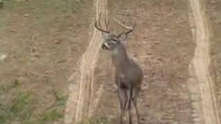Deer Hunting -- Young Bucks