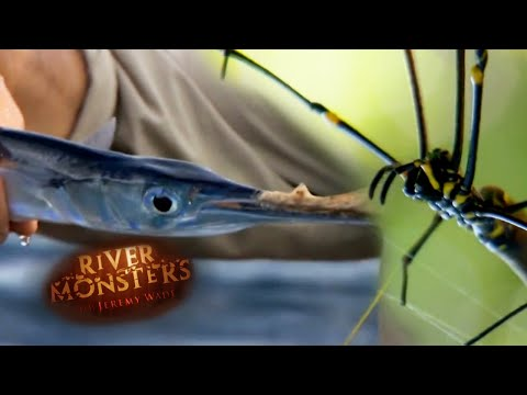 Catching Fish With Only A Spider Web & Kite | SPECIAL EPISODE!  | River Monsters