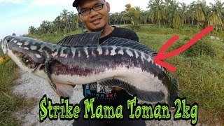 Video BUAYA BESAR!!! Strike Mama Muda di Port Buaya by Man Kumpaww MP3, 3GP, MP4, WEBM, AVI, FLV Agustus 2018