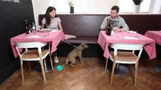 Pohyb a chování v restauraci