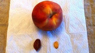 SUSCRÍBETE: http://goo.gl/aRHxPkUna fruta fresca y con jugo.Su CAROZO y su SEMILLA.