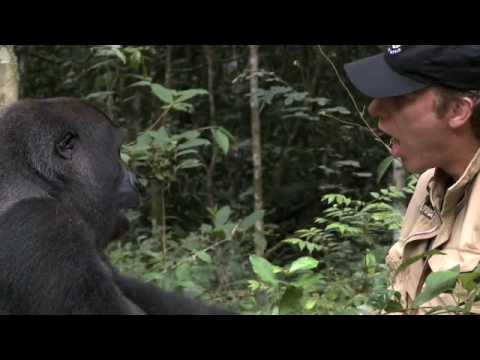 5年前他把一手養大的大猩猩放回森林,如今回到原地呼喊牠的名字時…森林裡出現了一個身影!