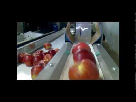Calibrador circular electrónico, trabajando manzana con abrillantado de la fruta i vaciado en agua.
