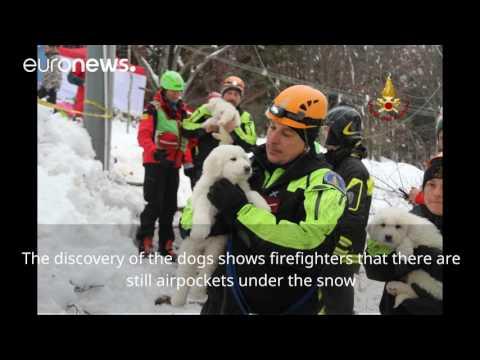 Pet dana nakon lavine spašena tri psića