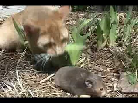 Cats In Trouble Funny Video