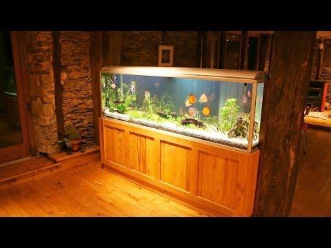 How to Maintain a Big Fish Tank   Aquarium Care