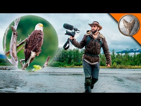 Coyote Peterson s Bald Eagle Adventure