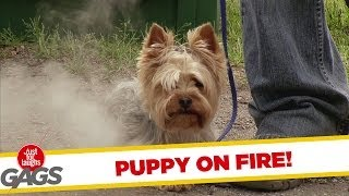 Puppy On Fire!
