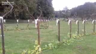 Bak - madžarska vas z razstavo jelenjih trofej