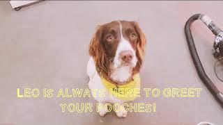 Take a tour around Hello Pets!