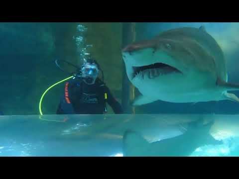 kid falls into shark tank and couldn't get out in time...