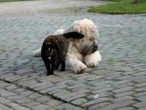 Il gatto innamorato del cane