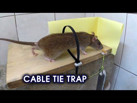Cable Tie Rat/Mouse Trap - Thời lượng: 4 phút, 20 giây.