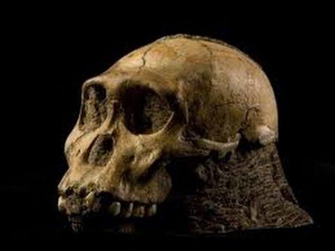 Neandertaler: Wer waren die Neandertaler? [Doku deutsch ...