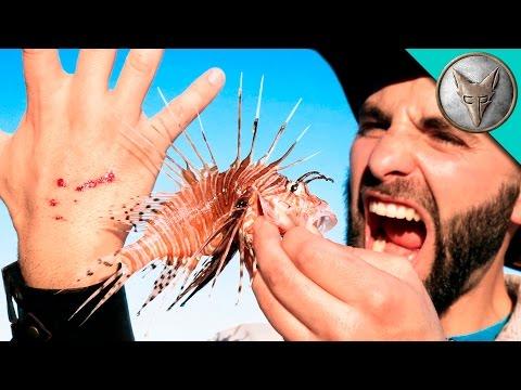 Hullu mies antaa myrkyllisen siipisimpun pistää käteen – Rajut oireet