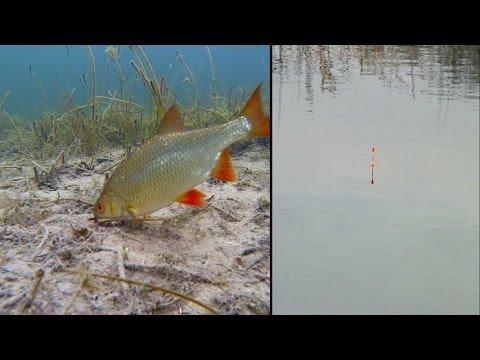 ловля рыбы с видеокамерой видео