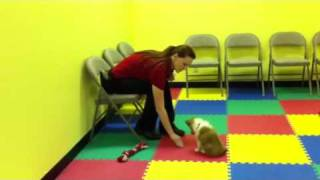 Dog Training Academy DTASFL YouTube video