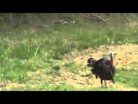 Turkey Hunt at Whitetail Crossing 2010
