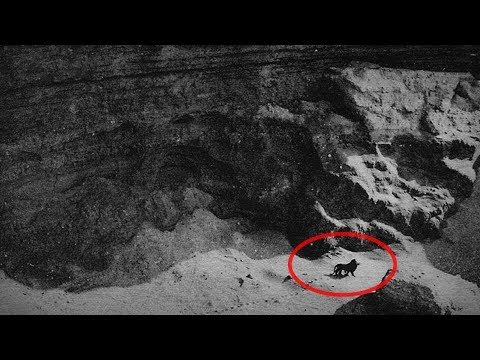10 Последних Фото и Видео Вымерших Животных - DomaVideo.Ru