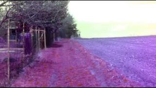 Video Dead triba - Simple Way