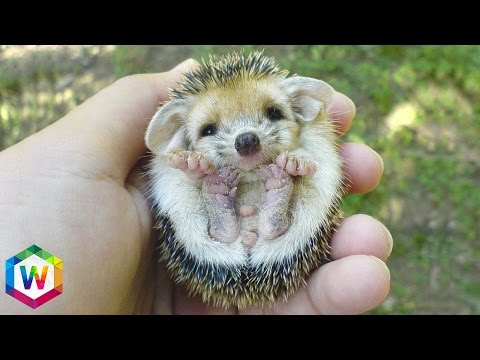 8 Of The Cutest Pets You Could Ever Own