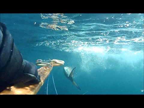 Pesca sub: LECCIA ..12 chili!!