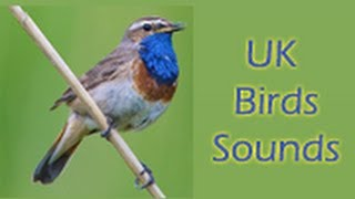 UK Birds Sounds Free YouTube video