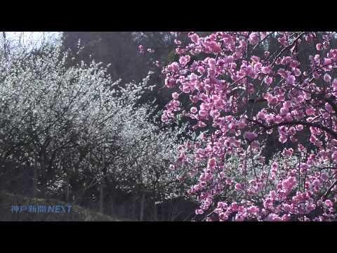 海峡望む丘 春の薫り 美湯・松帆の郷