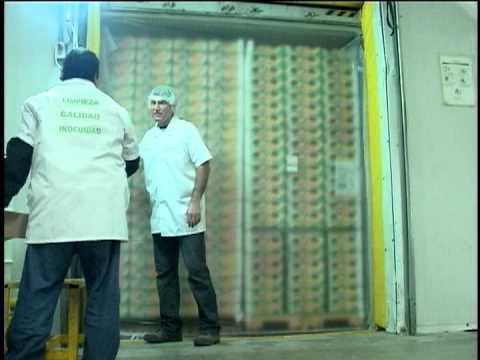 avocado exports from Mexico