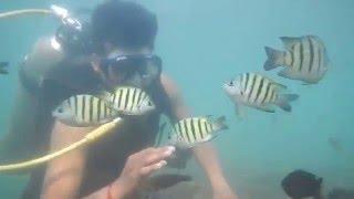 Malvan India  city pictures gallery : SCUBA Diving, Fish Feeding at Malvan, Maharashtra, India