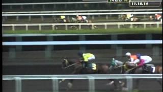 RACE 8 HAGDANG BATO 11/18/2014