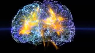 A journey through the brain