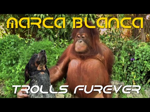 marca blanca: Trolls Furever (Android: Friends Furever Parody) - Marca Blanca