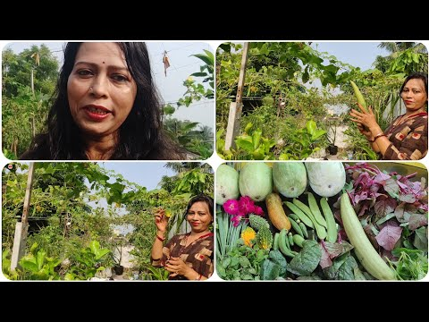 Weekly Harvesting In My Terrace Garden | Organic Vegetables Harvesting |