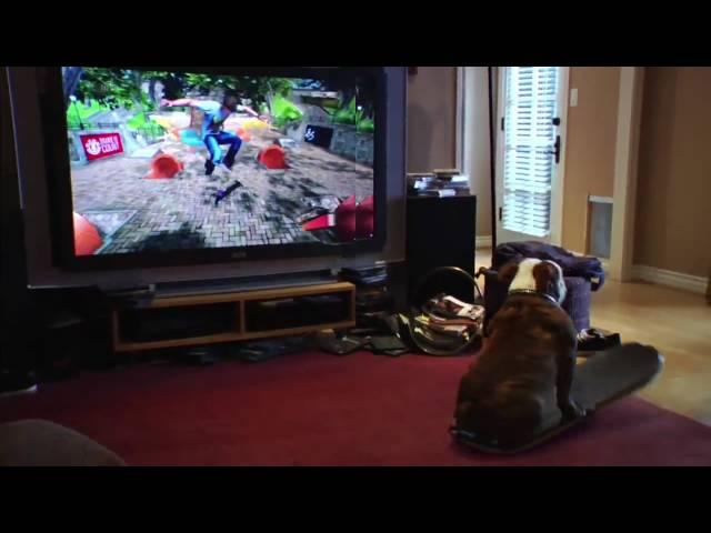Kinh ngạc trước tài năng của.. game thủ chó