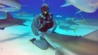 This Shark Likes To Be Pet Like A Dog