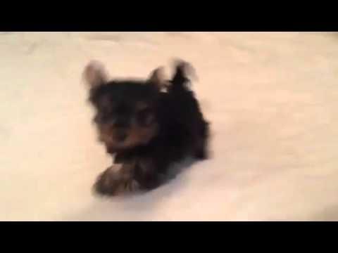 Sassy running around the room