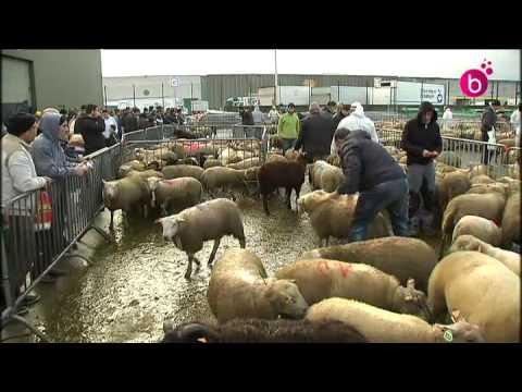 pourquoi la fete du mouton