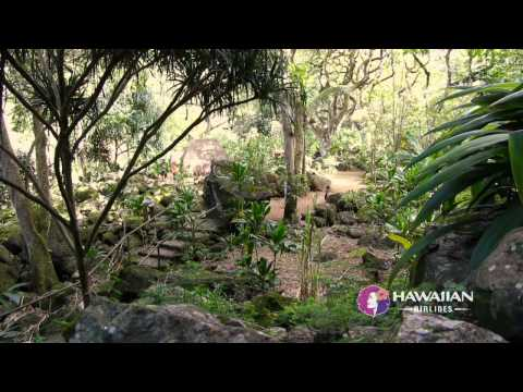 Valley - Known for big waves and surf culture, the North Shore of O'ahu is home to Waimea Valley, where visitors can immerse themselves in peace, quiet and a sense of...