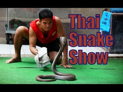 King Cobra Thai Snake Show Performance in Thailand