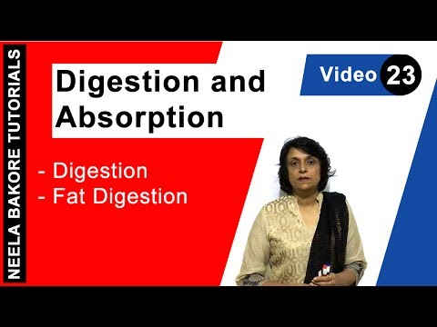 Digestion and Absorption - Digestion - Fat Digestion